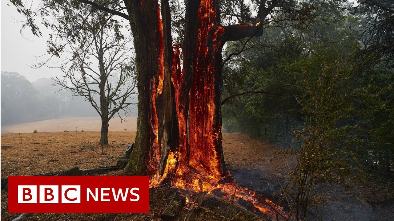The animals struggling in the crisis of Australian fires