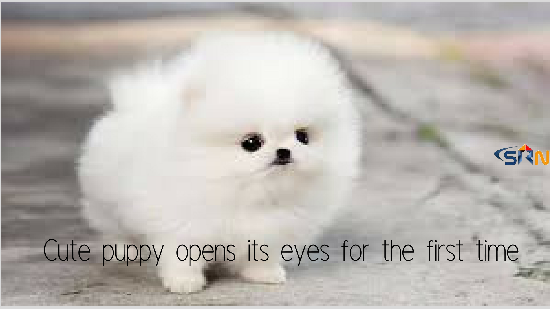 Cute Puppy opens its eyes for the first time